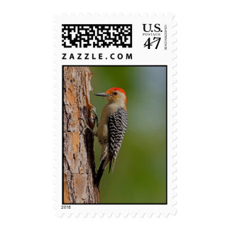 Red-bellied Woodpecker Postage