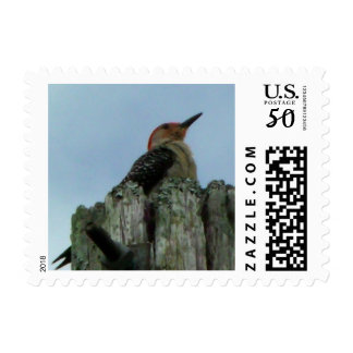 Red Bellied Woodpecker Postage Stamps