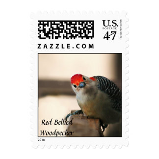 Red Bellied Woodpecker Stamp