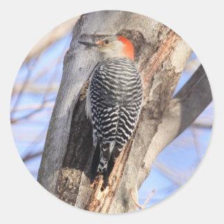 Red-bellied Woodpecker Round Sticker