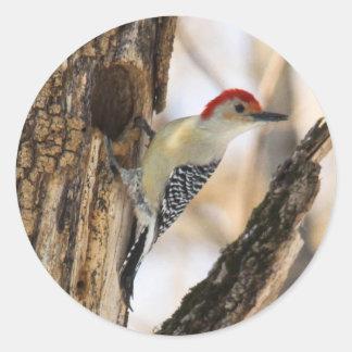Red-bellied Woodpecker Sticker