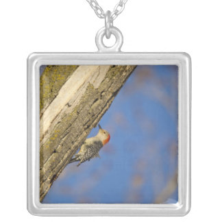 Red-bellied woopecker in tree square pendant necklace