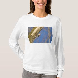 Red-bellied woopecker in tree T-Shirt