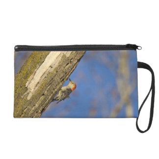 Red-bellied woopecker in tree wristlet purse