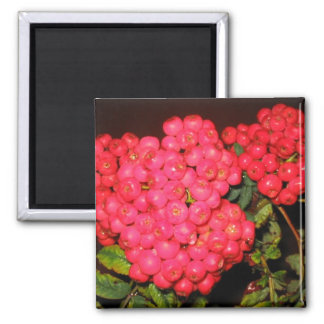 Red Berries 2 Inch Square Magnet