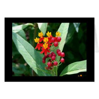 Red Berries - Blank Card