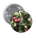 Red Berries Button