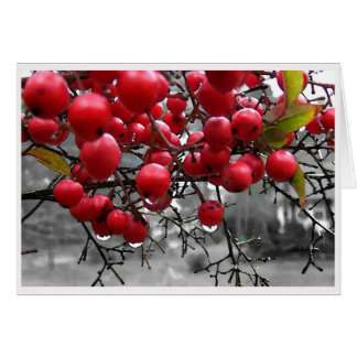 Red Berries Custom Holiday Card
