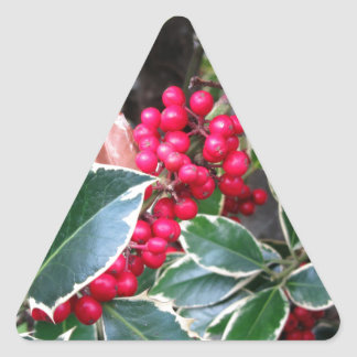 Red berries from a holly tree triangle sticker