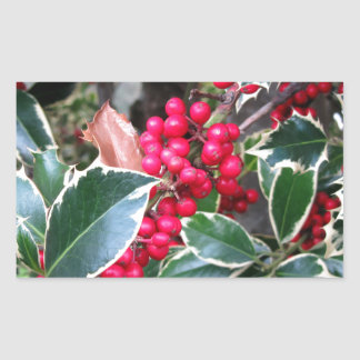 Red berries from a holly tree rectangular sticker