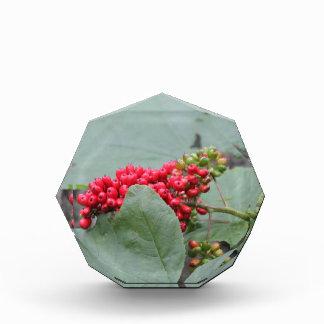 Red Berries In Alaska Award