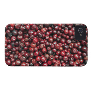 Red berries of the Himalayas iPhone 4 Case-Mate Case