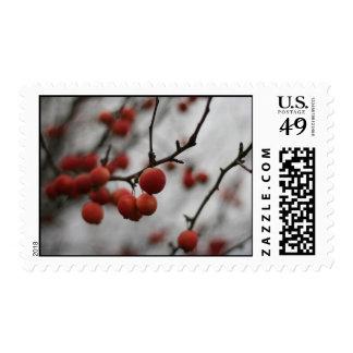 Red Berries Postage