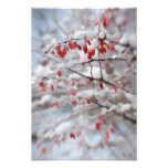 Red Berry Bush in Winter Painting Photo Print