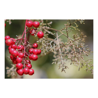 Red Berry Poster
