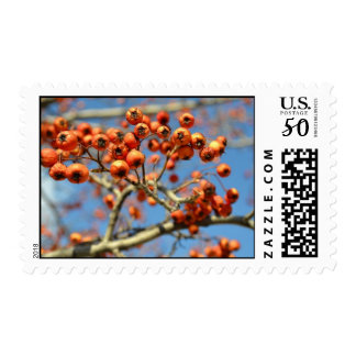 Red Berry Tree Postage Stamp