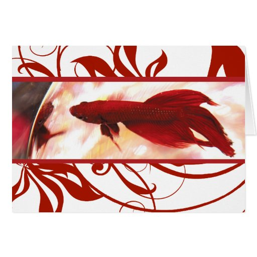 Red Betta Fish Thank You Card Zazzle