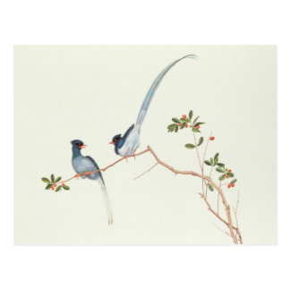 Red-billed blue magpies,a branch red berries postcard