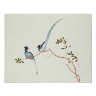 Red-billed blue magpies,a branch red berries poster