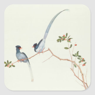 Red-billed blue magpies,a branch red berries square sticker