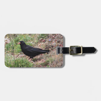 Red-billed chough luggage tag