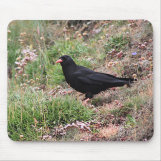 Red-billed chough mouse pad