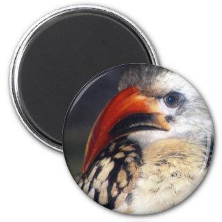 red billed hornbill 2 inch round magnet