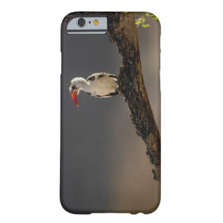 Red-billed Hornbill, Tockus erythrochynchus, Barely There iPhone 6 Case