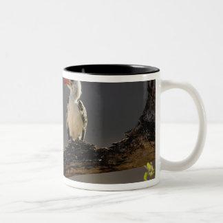 Red-billed Hornbill, Tockus erythrochynchus, Two-Tone Coffee Mug