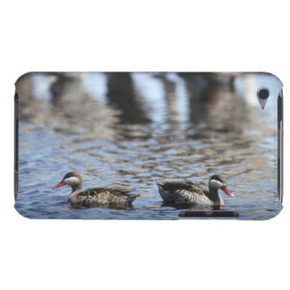 Red-billed teal (Anas erythrorhyncha) pair in Case-Mate iPod Touch Case