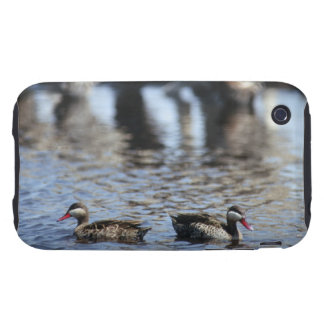 Red-billed teal (Anas erythrorhyncha) pair in iPhone 3 Tough Cover