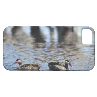 Red-billed teal (Anas erythrorhyncha) pair in iPhone SE/5/5s Case