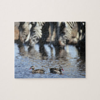 Red-billed teal (Anas erythrorhyncha) pair in Jigsaw Puzzle
