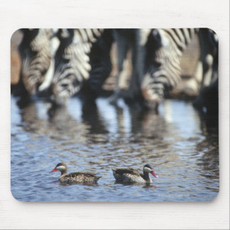 Red-billed teal (Anas erythrorhyncha) pair in Mouse Pad