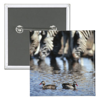 Red-billed teal (Anas erythrorhyncha) pair in Pinback Button