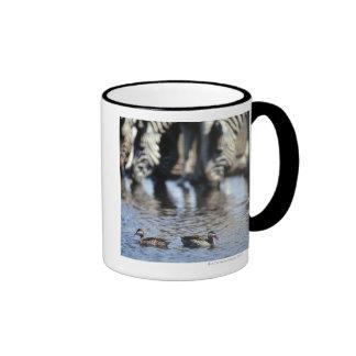 Red-billed teal (Anas erythrorhyncha) pair in Ringer Mug
