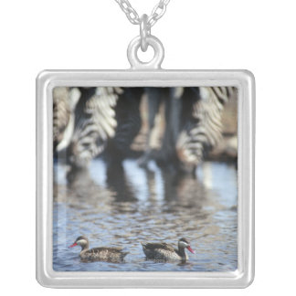 Red-billed teal (Anas erythrorhyncha) pair in Silver Plated Necklace