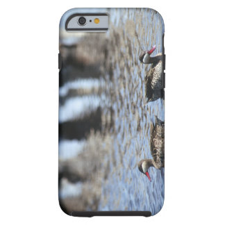Red-billed teal (Anas erythrorhyncha) pair in Tough iPhone 6 Case