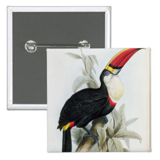 Red-Billed Toucan, from 'A Monograph of the Rampha Button