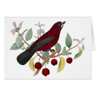Red Bird Card
