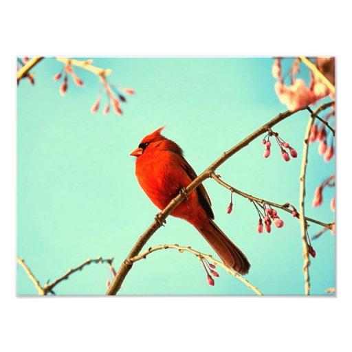 Red Bird & Cherry Blooms Photo Print