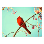 Red Bird & Cherry Blooms Photographic Print