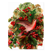 Red Bird in the Holly Postcard