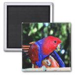 Red Bird Magnet