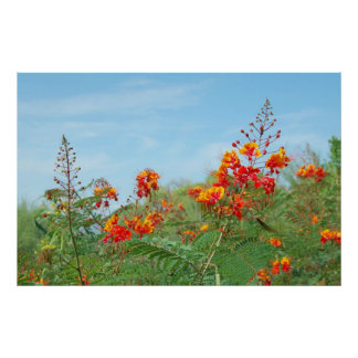 Red Bird Of Paradise ~Print~ Poster