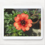 Red black and yellow garden flower mousemats