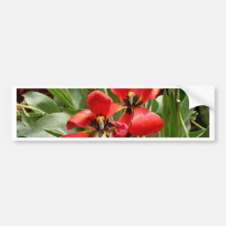 Red, black and yellow tulips bumper sticker