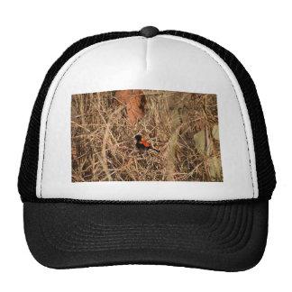 RED & BLACK FINCH QUEENSLAND AUSTRALIA TRUCKER HAT