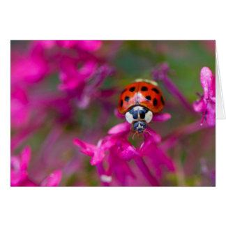 Red Black Ladybug Ladybird on Pink Flowers Card