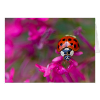 Red Black Ladybug Ladybird on Pink Flowers Card